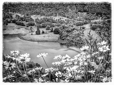 Photograph - Daisies At Queens View In Greyscale by Joan-Violet Stretch