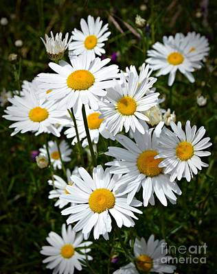 Photograph - Daisies by Chalet Roome-Rigdon