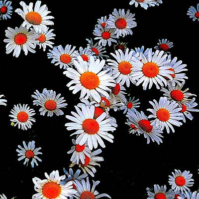 Photograph - Daisies by Colin Drysdale