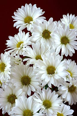 Photograph - Daisies by Diane Reed