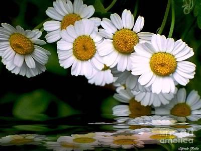 Photograph - Daisies by Elfriede Fulda