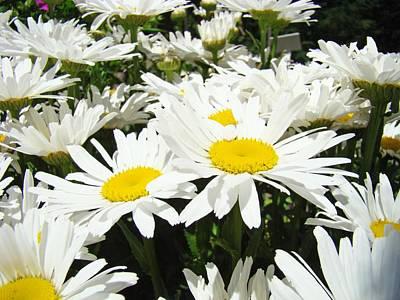 Daisies Floral Landscape Art Prints Daisy Flowers Baslee Troutman Art Print by Baslee Troutman