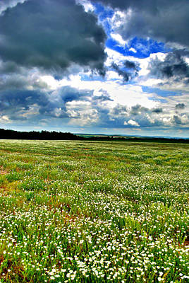 Clouds Photograph - Daisies Galore by Emily Stauring