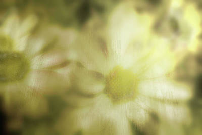 Art Print featuring the photograph Daisies by Gray  Artus