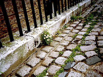 Photograph - Daisies Growing In An Unlikely Place In London, England by Merton Allen