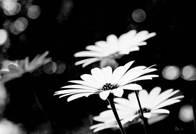 White Wall Art - Photograph - Daisies In Black And White by Bill Linn