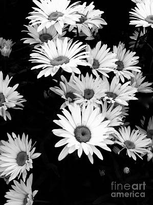 Photograph - Daisies In Black And White by Joan-Violet Stretch