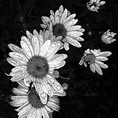 Photograph - Daisies In Black And White - Photography by Ann Powell
