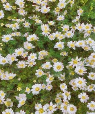 Painting - Daisies In Spring by Tracey Harrington-Simpson