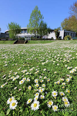 Photograph - Daisies In The Lawn At Ewell Surrey by Julia Gavin