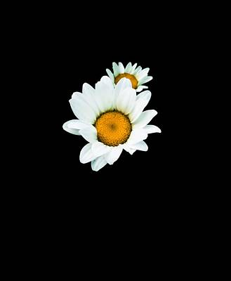 Daisy Photograph - Daisies In The Night by Heather Joyce Morrill
