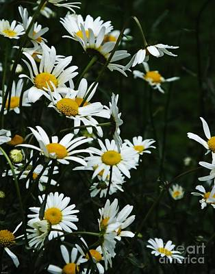 Photograph - Daisies by Lizi Beard-Ward