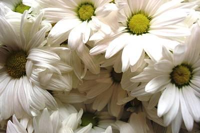 Photograph - Daisies Make Me Smile by Laura  Grisham