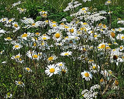 Photograph - Daisies by Michael Graham