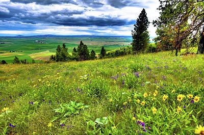 Photograph - Daisies On Kamiak Butte by David Patterson