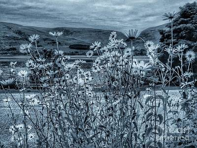 Photograph - Daisies On The Roadside At Loch Linnhe In Cyantone by Joan-Violet Stretch