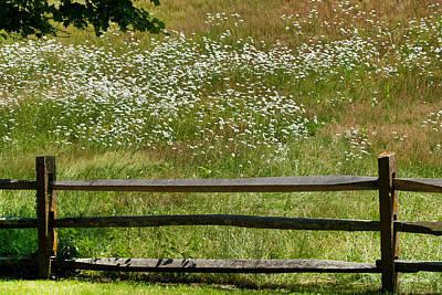 Marthas Vineyard Photograph - Daisies On The Vineyard by Michelle Wiarda