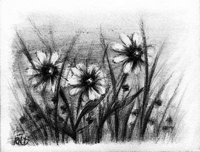 Daisy Drawing - Daisies by Rachel Christine Nowicki