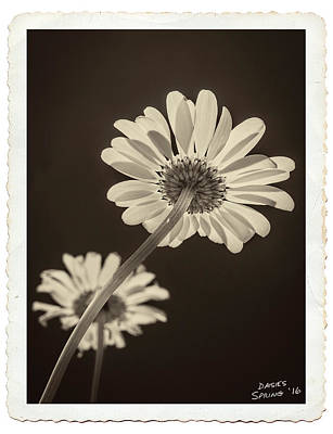 Photograph - Daisies Reaching For The Sun by Garry McMichael