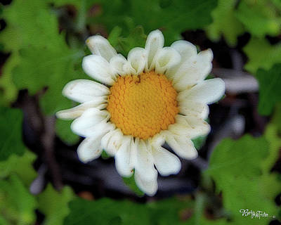 Photograph - Daisy # 4203 by Barbara Tristan