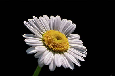 Photograph - Daisy 011 by George Bostian