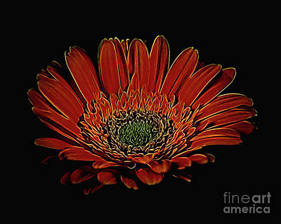 Photograph - Daisy 105 by Ray Shrewsberry