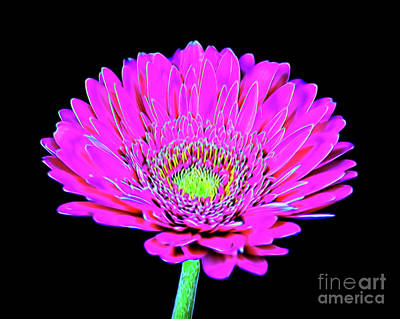 Photograph - Daisy 116 by Ray Shrewsberry