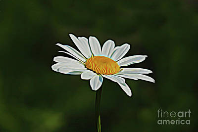 Photograph - Daisy 17718 by Ray Shrewsberry