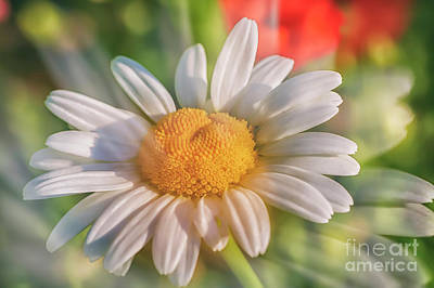 Abstract Flowers Royalty-Free and Rights-Managed Images - Daisy 2 by Veikko Suikkanen