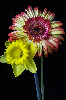 Yellow Daffodils Photograph - Daisy And Daffodil by Garry Gay