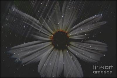 Photograph - Daisy Art by Janice Spivey