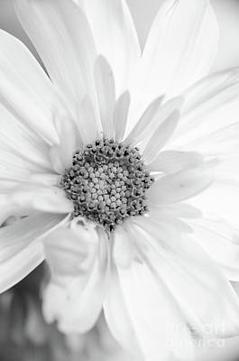 Photograph - Daisy Black White by Andrea Anderegg
