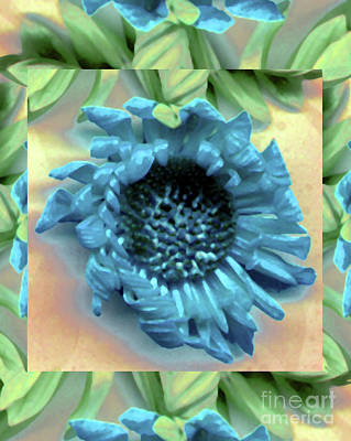 Photograph - Daisy Blue Frame by Heather Kirk