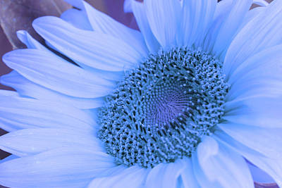 Art Print featuring the photograph Daisy Blue by Marie Leslie