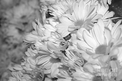 Photograph - Daisy Bouquets Grayscale by Jennifer White