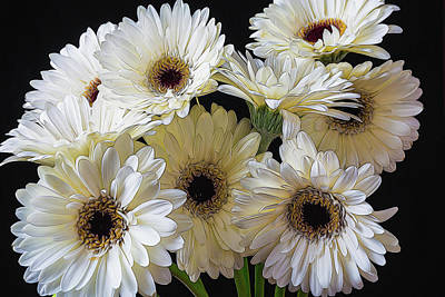 White Flower Photograph - Daisy Bunch by Garry Gay