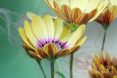 Digital Art - Daisy By Design Green by Janie Johnson