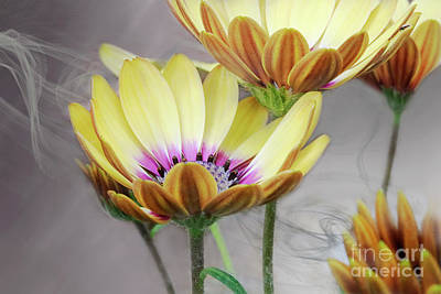 Digital Art - Daisy By Design Grey by Janie Johnson