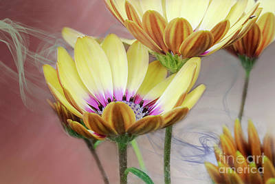 Digital Art - Daisy By Design Light Salmon by Janie Johnson