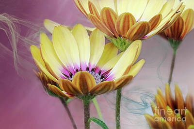 Digital Art - Daisy By Design Pink by Janie Johnson