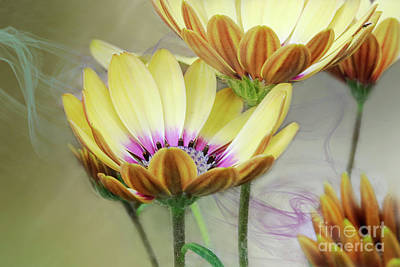 Digital Art - Daisy By Design Yellow by Janie Johnson
