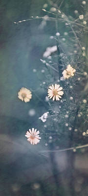 Photograph - Daisy Chain by Elvira Pinkhas