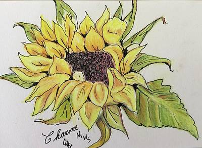 Drawing - Daisy by Charme Curtin