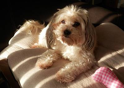 Photograph - Daisy Chilling In The Morning Sun by Belinda Lee