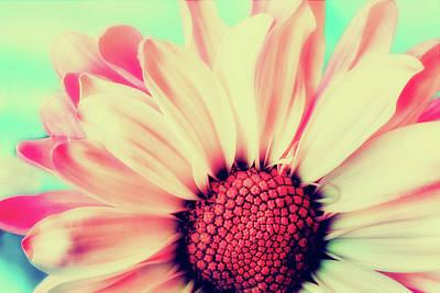 Photograph - Daisy Closeup by Pixabay
