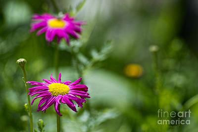 Kim Fearheiley Photography - Daisy by David Arment