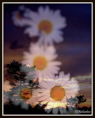 Mixed Media - Daisy Dawn by Priscilla Richardson