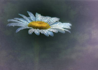 Daisy Mixed Media - Daisy Daydreams by Lori Deiter
