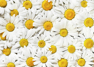 Photograph - Daisy Delight by Alan L Graham