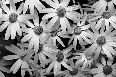 Photograph - Daisy Delight by Ann Bridges